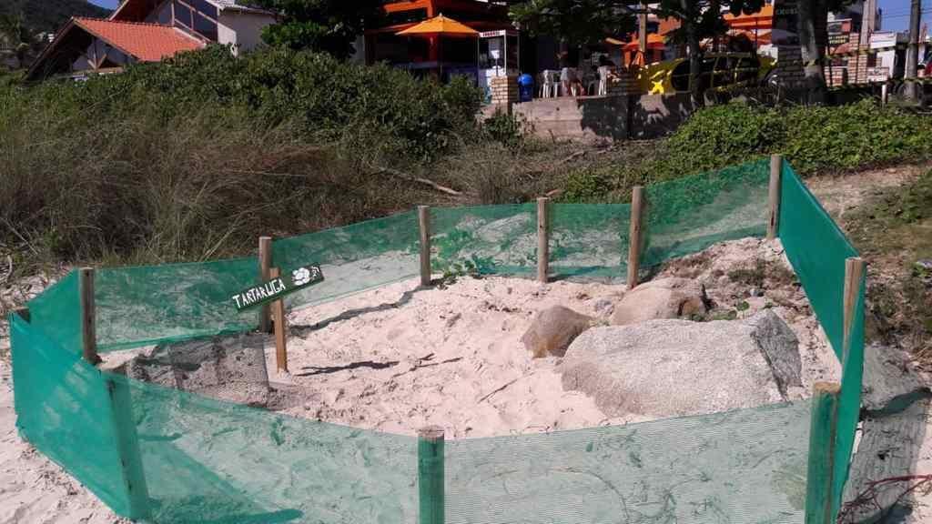 BOMBINHAS – Bombinhas tem duas áreas de postura de tartarugas