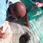 BOMBINHAS - Bombinhas tem duas áreas de postura de tartarugas