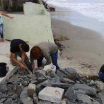 PORTO BELO - Grande número de caranguejos surgem na Praia do Perequê