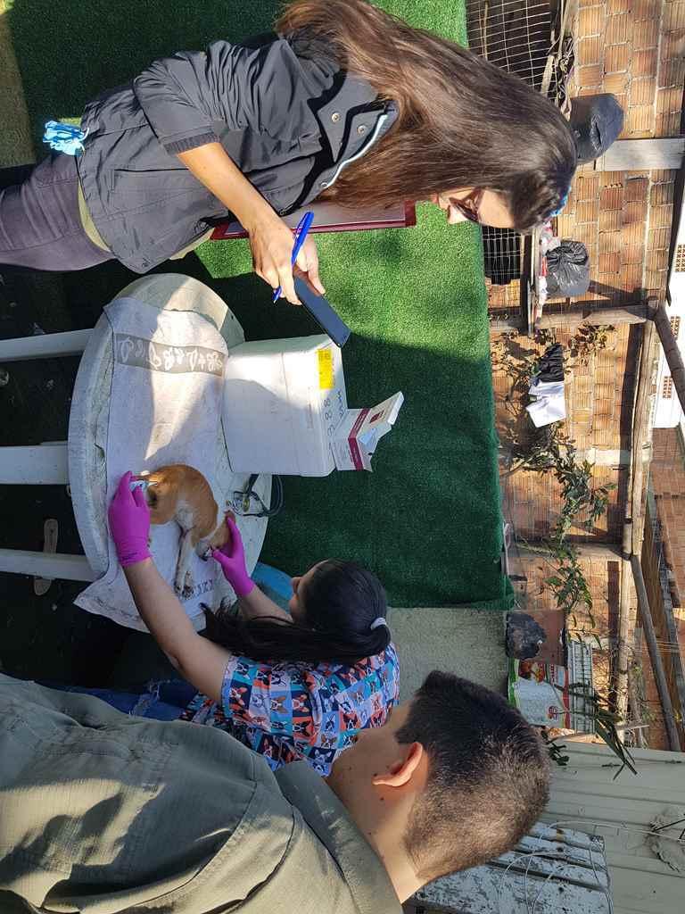 PORTO BELO - Porto Belo realiza ação para vacinar cães de rua