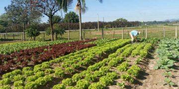 PORTO BELO - Horto Municipal de Porto Belo retoma distribuição de hortaliça