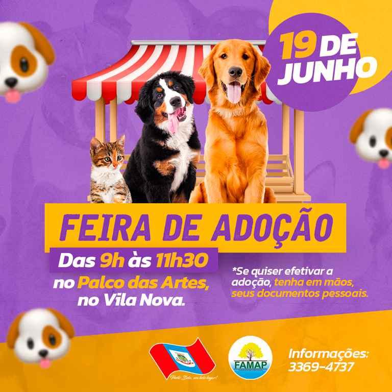 PORTO BELO - Porto Belo terá feira para doação de animais neste sábado