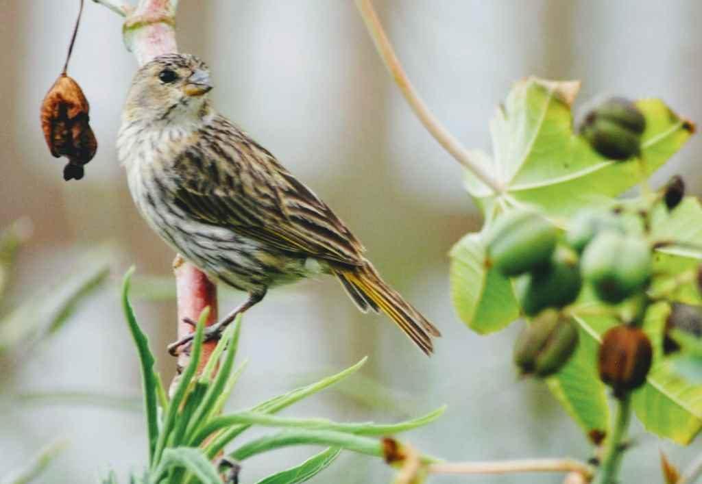 Itapema vai participar de Roteiro de Observação de Aves da região
