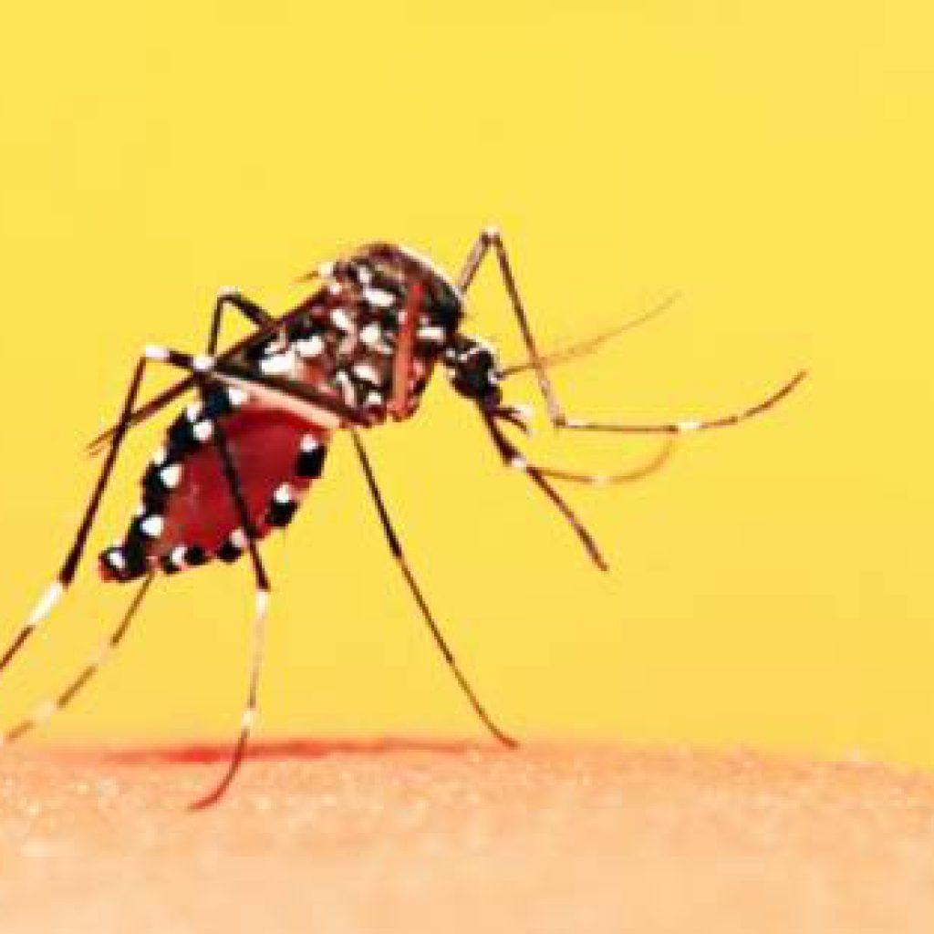 Vacinação da Febre Amarela segue disponível nas UBS
